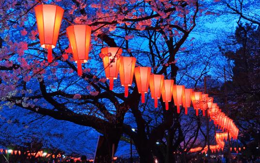 kyoto kirsebærtræer