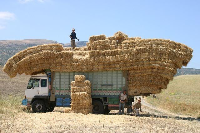 Rejseforsikring til Marokko