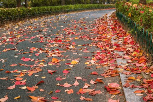Fall break leaves536